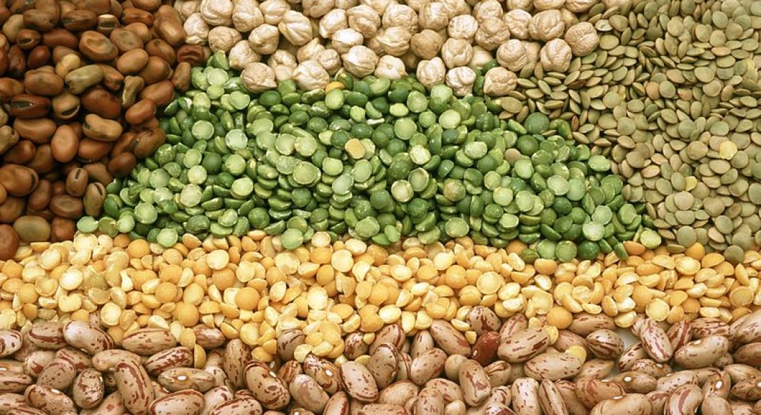 High-Protein Pulses Imports on The Rise