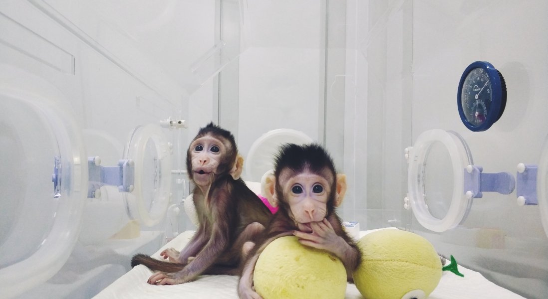 Chinese Scientists Clone Primates for First Time
