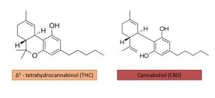 THC vs. CBD molecular structures
