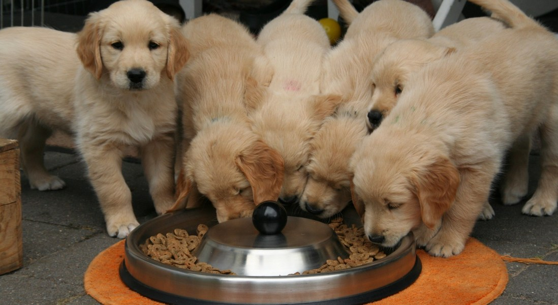 "Darwin's Pet Food Recall Spurs ""Serious Threat"" Warning from FDA"