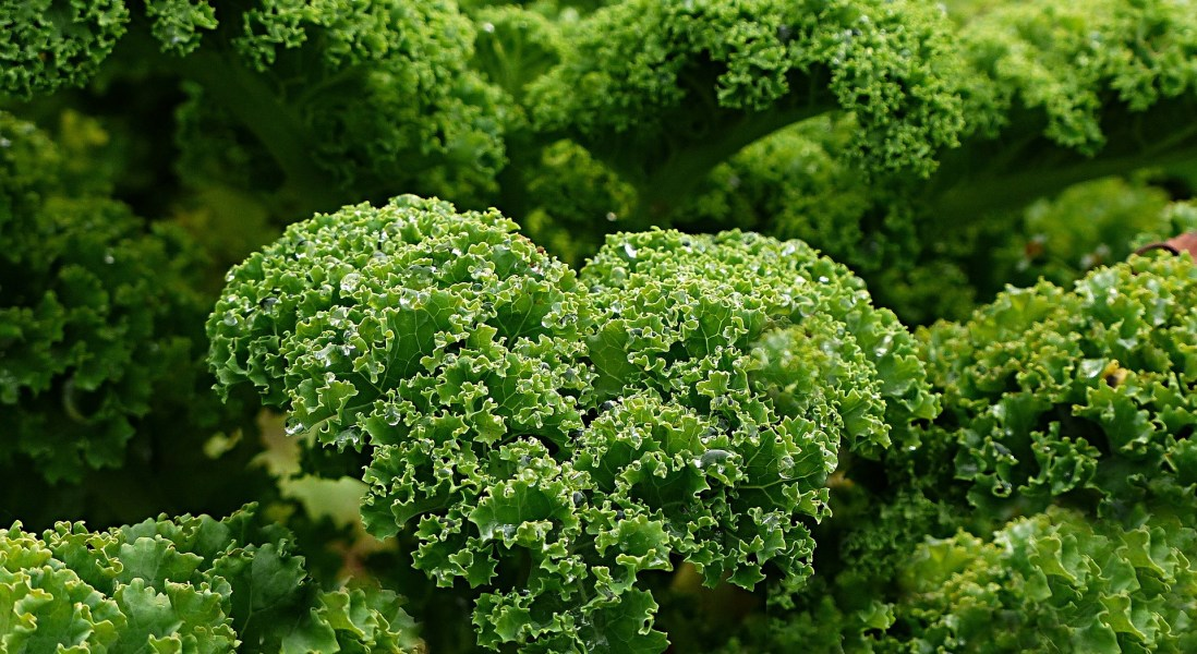 Kale Isn't as Healthy as You Think, According to New Report