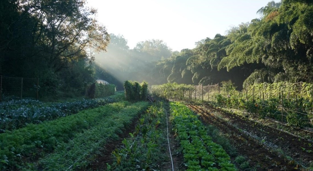Feeding Food Security: Why Smart Cities Invest in Urban Agriculture