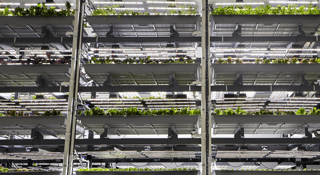 Can Indoor Farming Revive America's Food Supply?