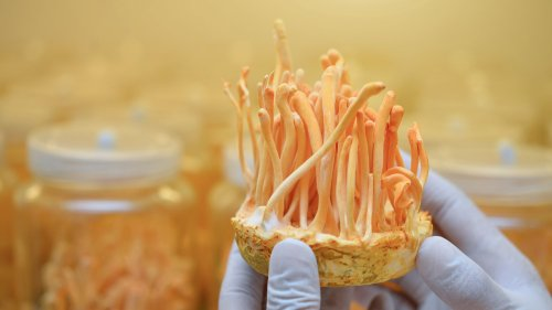 What are Cordyceps?