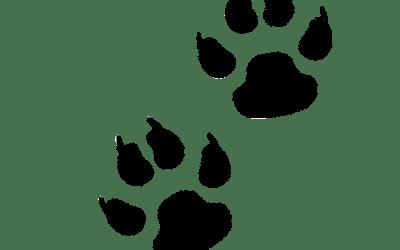 Xàtiva Unida proposa replantejar el sistema dissuasori per a la recollida d'excrements canins