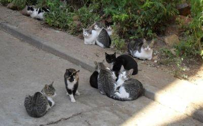 L'Ajuntament de Xàtiva aprova inicialment el Pla de Colònies Felines per a la creació d'un cens i la seua gestió