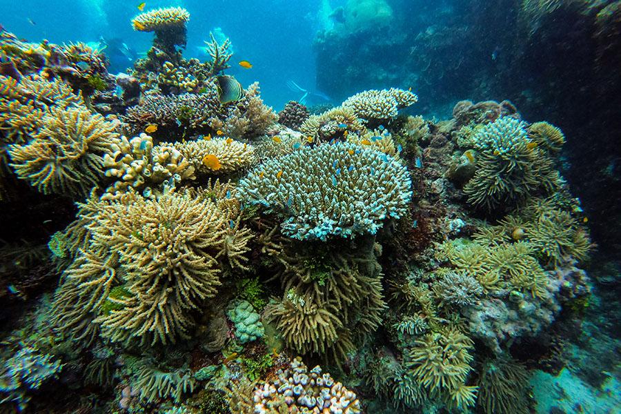 Diving corals