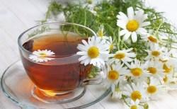 Chá de Camomila os Benefícios para Saúde