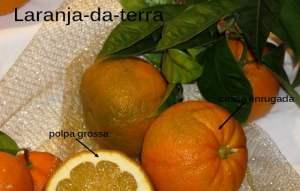 Receita de laranja da terra