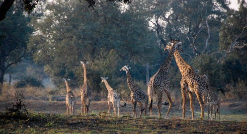 Vakantie_Zambia_100719_0117-13