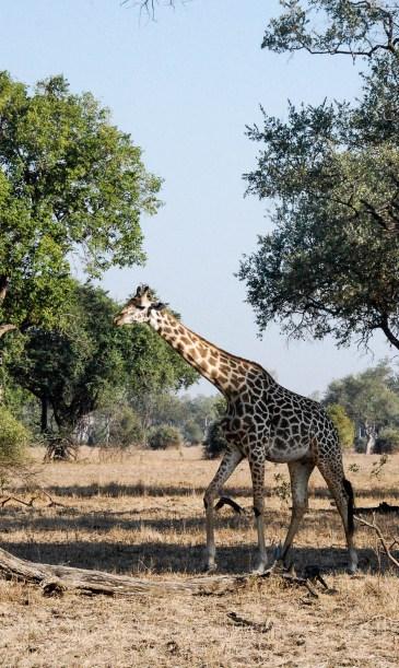 Vakantie_Zambia_110719_0210-23