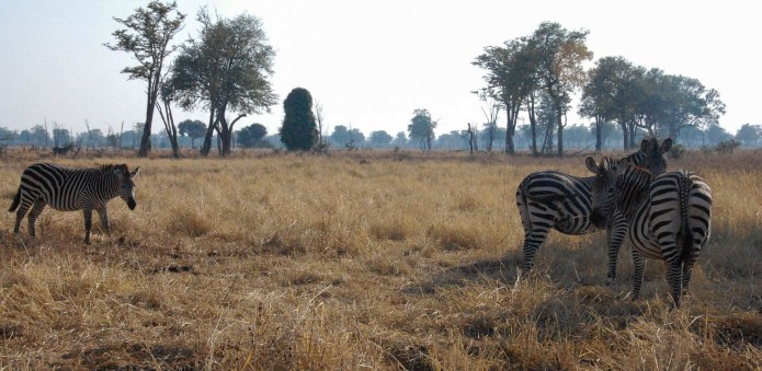 Vakantie_Zambia_110719_0229-26