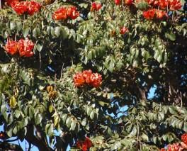 Vakantie_Zambia_170719_0531-108
