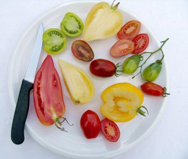 Teller mit Tomaten