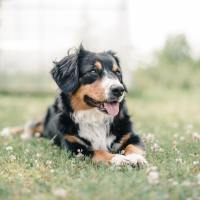 Gardener's Guide: how to Protect Pets from Lawn Chemicals