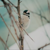 Gardener's Guide on how to Help Wildlife in the Winter