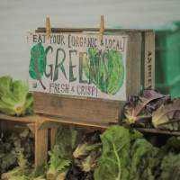 Indoor Farms Could Satiate Hunger in Massachusetts Food Deserts