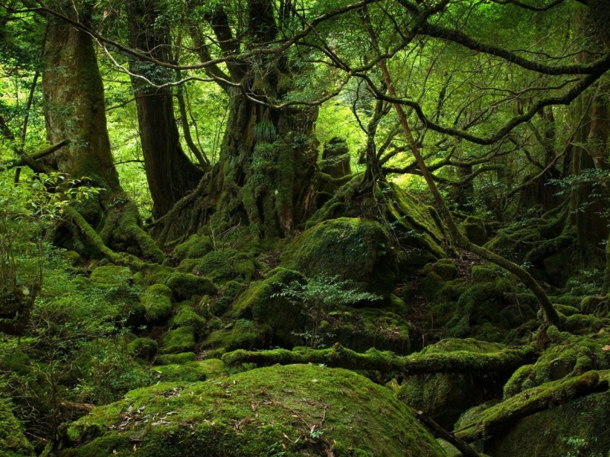 trees-wood-jungle-moss-stones-green-branches-roots
