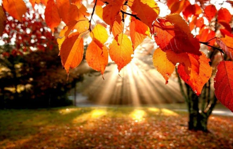 Есен,есен…