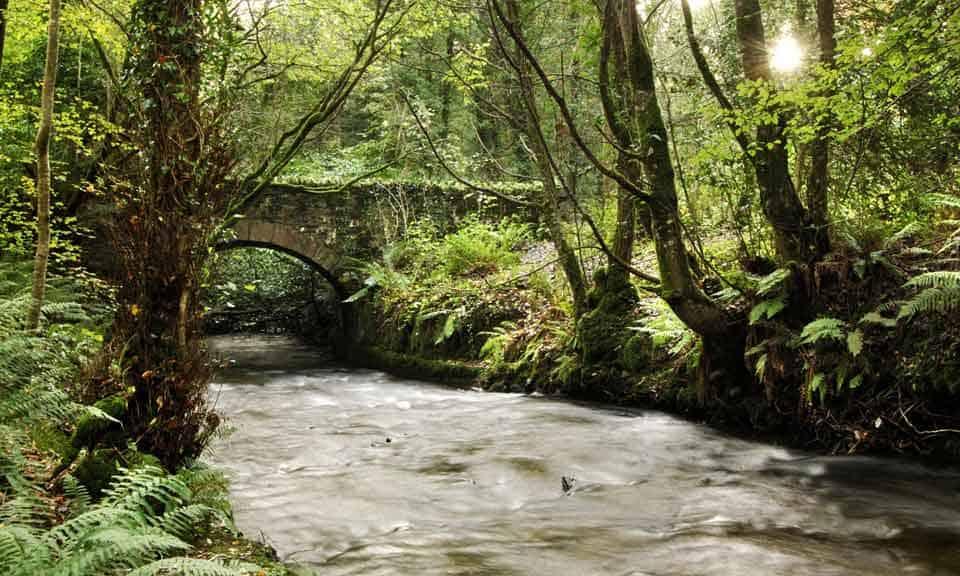 Cabra Dun a ri woods