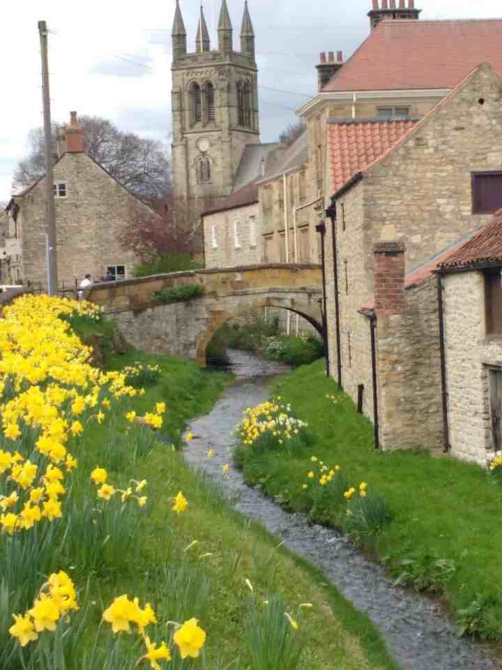 the daffodils bloom early in Yorkshire in the spring - this is Helmsley a beautiful village in Yorkshire