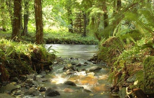 forest in Glenarm