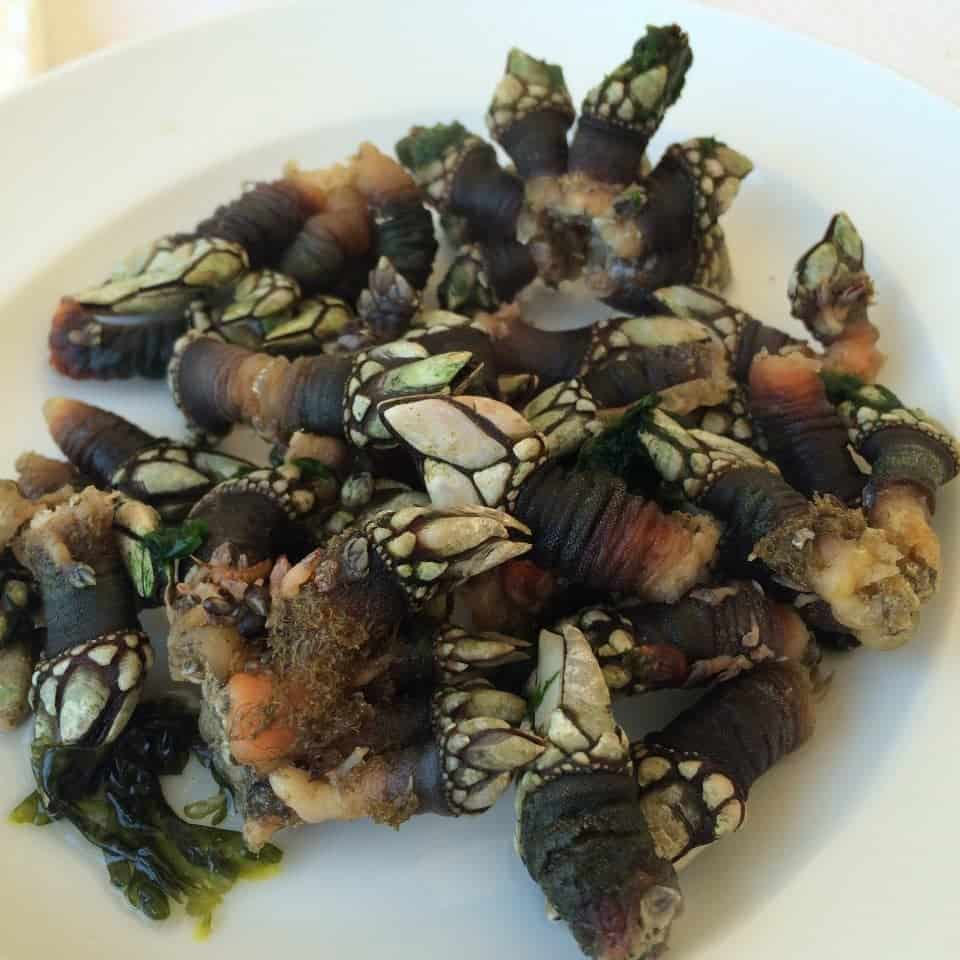 unusual foods - percebes in Portugal