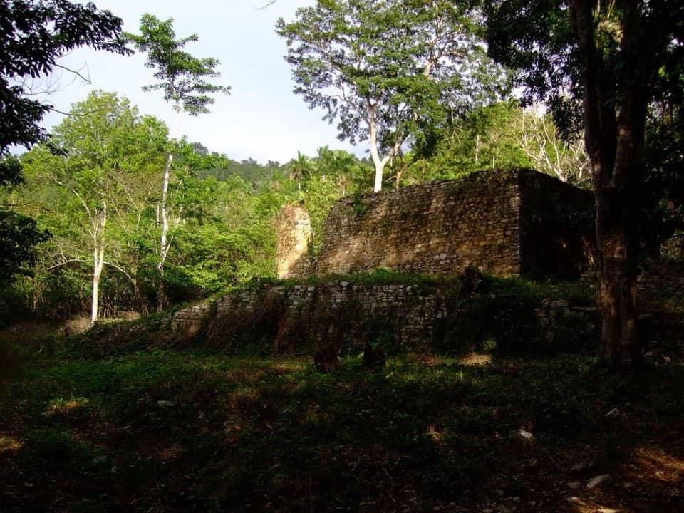 a lush green coffee plantation in Cuba