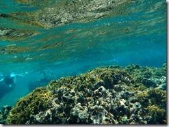 Underwater Orbs (5/6)