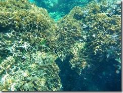 Underwater Orbs (2/6)