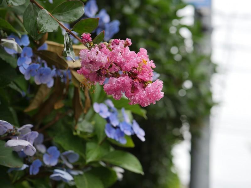 花の道化師