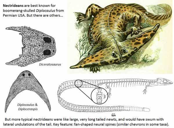 ディプロカウルスの画像