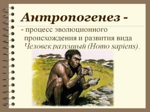 Проблема антропогенеза 2