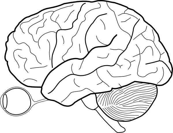 easy brain diagram ford falcon radio wiring cauliflower drawing transparent png clipart free download blank speech 600 x 463 5 0