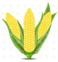 corn clipart cob on the vector image graphic library [ 967 x 1200 Pixel ]