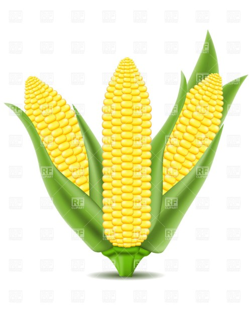 small resolution of corn clipart cob on the vector image graphic library