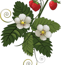 strawberry big image png plant clipart fruit plant banner freeuse [ 1350 x 1687 Pixel ]