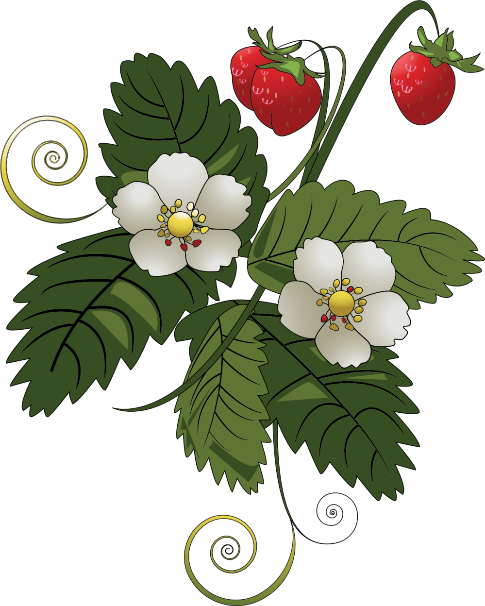 medium resolution of strawberry big image png plant clipart fruit plant banner freeuse
