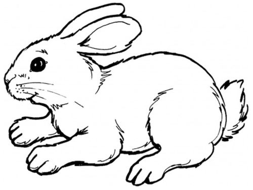 small resolution of bunny clipart hare drawing a rabbit of clip art transparent