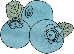 Spot illustration of blue berries | Italian Food Illustrations of Cheese, Pasta, & Desserts by food and travel illustrator Yaansoon: Posters, Roll-Up Banners, and Menus Commissioned by The Italian Trade Agency (Agenzia ICE) for the Italian Culinary Week (Settimana della Cucina Italiana nel mondo) | Illustration Commission | Italian Taste, Cucina Italiana, Italian ingredients, DOP & IGP EU certified foods