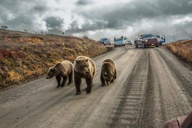 National Geographic 2016-cı ilin ən yaxşı şəkilləri