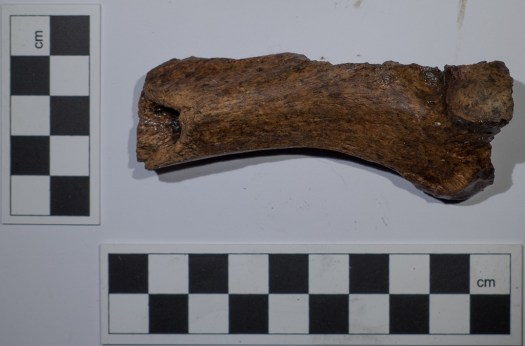 Fragment of human bone 1