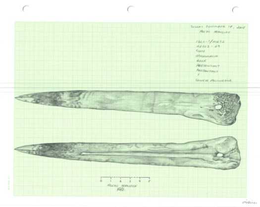 Illustration of bone knife by Alexis Ironside
