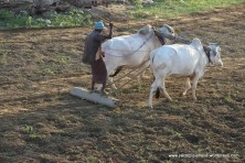 basic farming methods!