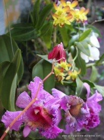 orchids grafted and grown by nuns on island