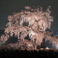 【丸山公園】(30分)