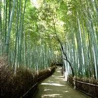 【竹林の小径】(35分)