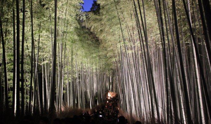 [12月の京都]京都の冬を告げる「嵐山 花灯路 」