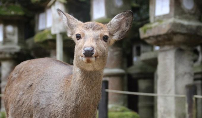 Deer Gathering