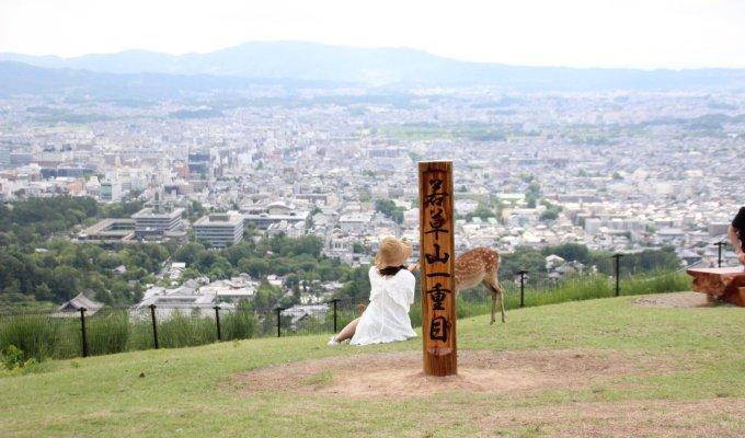 【奈良名物】鹿と大仏と若草山で深呼吸